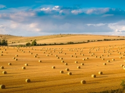 South Downs Research Conference explores life after Brexit